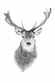deer head deer head by tydoughty on deviantart