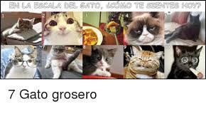 imagenes groseras de gatos en la escala del gato gcomo te sientes hoye 10 7 gato grosero meme
