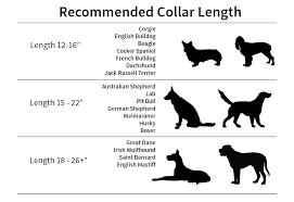 australian shepherd size chart measuring guide u2014 attention hounds