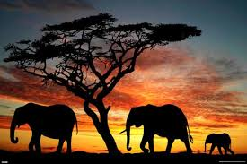 elephant family in africa at sunset kingdom poster