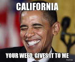 What You Gonna Do Meme - ann california coin cryptocurrency designed for the people of