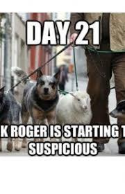 Dog Funny Meme - 45 funny dog memes dogtime