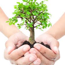 plant a tree to celebrate arbor day majestic lawn landscape