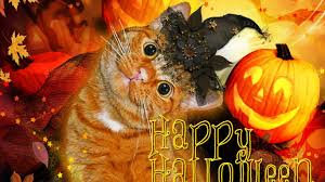 halloween cats wallpaper cat animals cats wallpaper images cat hd 16 9 high definition