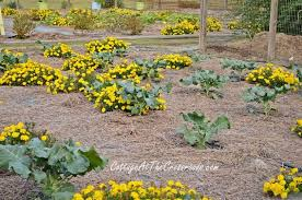 Fall Vegetable Garden Ideas Fall Vegetable Garden Ideas Hometalk