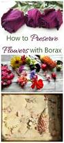preserve flowers with borax tips for best results sprinkles