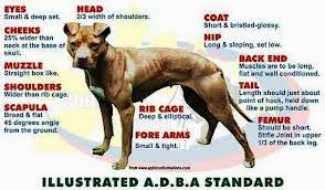 american pitbull terrier game bred bloodlines pit bulls against misinformation what is a pit bull