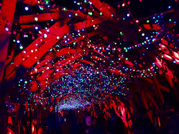 oh snap illuminating the with the la zoo lights the