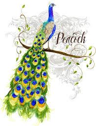 peacock tail art fine art america