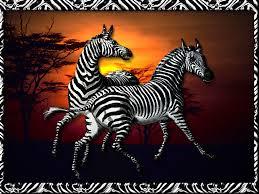 fun zebra pictures u0026 facts