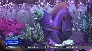 ornamental fish business growing in south africa