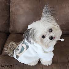 22 times norbert the therapy dog warmed your heart white hoodie
