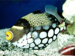 Okeanos Aquascaping Luxury Aquarium Hand Pick Your Exotic Fish And Take It Homeluxuo