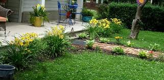 day lillies how to grow daylilies today s homeowner