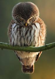 Funny Owl Meme - you just offended the owl the meta picture