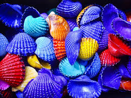 bold color bold color shells stock photo image of shell yellow 26732562