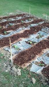 why you should mulch your vegetable garden this summer save