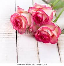 fresh flowers fresh flowers stock images royalty free images vectors