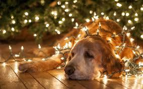 dog wallpapers christmas dog wallpaper