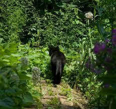 your backyard wildlife habitat start planning now the creative cat