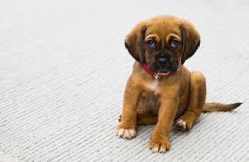 free stock photos of cute animals pexels