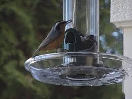 first time feasters at my new backyard bird feeder u2013 fossils u0026 fauna