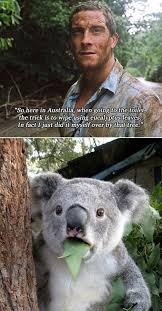 Funny Bear Meme - funny bear grylls meme imglulz