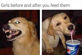 Happy Dog Meme - dog yawns and girls are happy justpost virtually entertaining