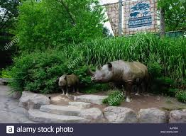 Botanical Garden Cincinnati Like Rhino Figures Welcome Visitors At The Entrance Of The