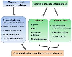frontiers enhancing crop resilience to combined abiotic and