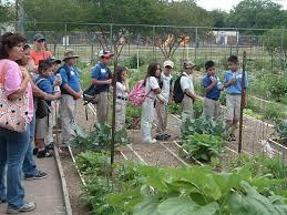 Houston Urban Gardeners - urban gardening u0027s roots spreading throughout texas agrilife