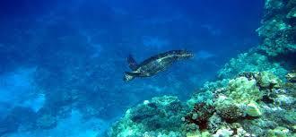 eco friendly hotel in hawaii mauna lani bay hotel u0026 bungalows