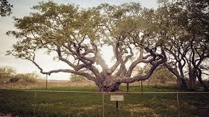 the big tree monthly
