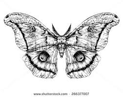 detailed realistic sketch butterfly moth stock vector 266377007