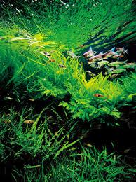 Aquascape Takashi Amano Nature Aquarium Photographs Amanotakashi Net