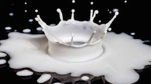 could lactose explain the milk u0026 parkinson u0027s disease link