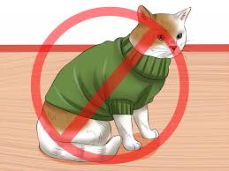 how to have cats without being a cat lady 10 steps