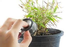 House Plants Diseases - pest and disease remedies for houseplants australian handyman