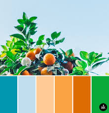 color combinations with orange an orange tree inspired color palette akula kreative