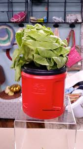 easy hydroponic planter grow lettuce in repurposed coffee