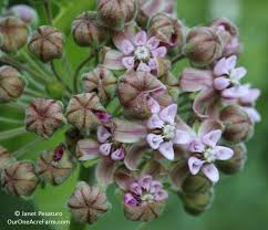 native virginia plants 12 native plants for food and medicine