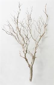 manzanita tree branches sandblasted manzanita branches 36 blooms and branches