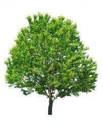 small tree stock photo colourbox