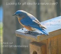 north carolina bluebird society eastern bluebird conservation
