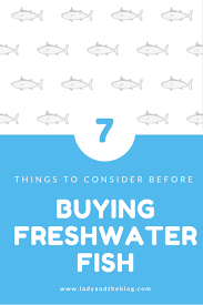 Freshwater Fish 7 Things To Consider Before Buying Freshwater Fish Lady And The Blog