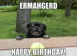 Birthday Meme Dog - 80 top funny happy birthday memes