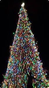 running the washington dc christmas trees fannetastic food