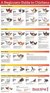 117 best chicken coop and a garden amzn images on pinterest