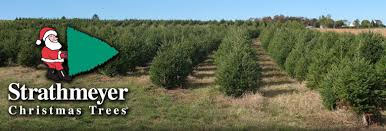 strathmeyer christmas trees lot locations
