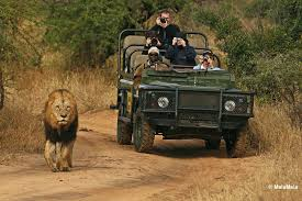 african safari car top 5 places to see lions in the wild